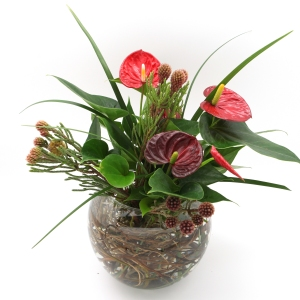 TROPICAL ARRANGEMENT_