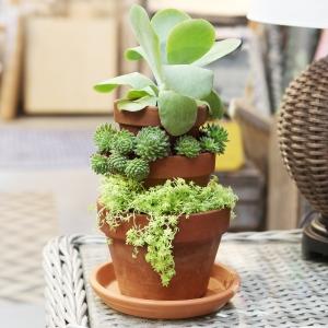 succulentplanter1